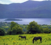 Horses overlooking Lower Lake,Killarney